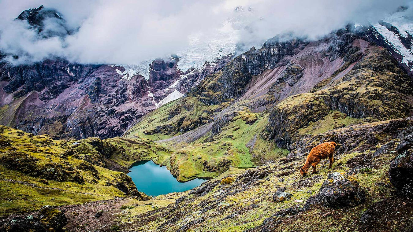 lares trek feel peru